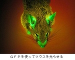 GFP(蛍光タンパク質).jpg
